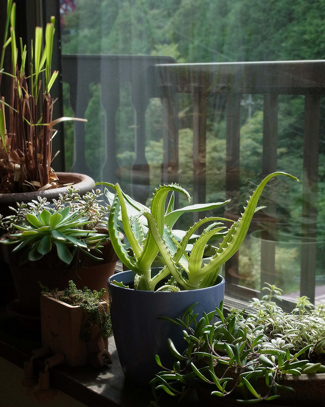 Plants_in_House