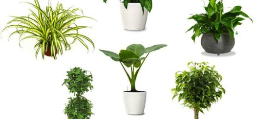 air-purifying-indoor-plants-l-fyow4o