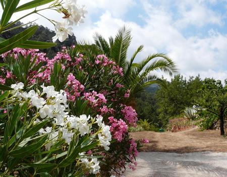 Mediterranean Gardens (4)