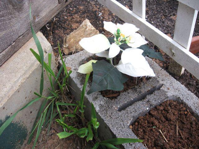 Plastic Flowers Garden (3)
