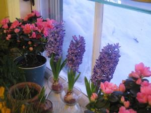 Bulb Garden (3)