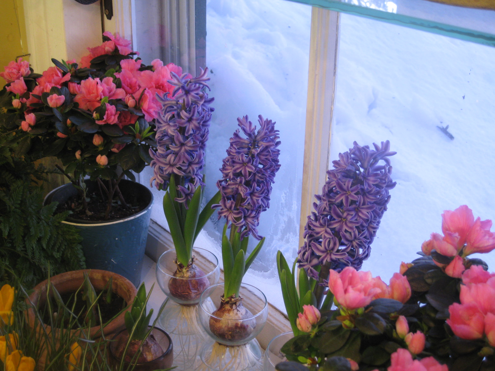 Prepping Up Your Garden With Spring Bulbs Interior