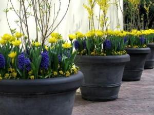 Bulb Garden (4)