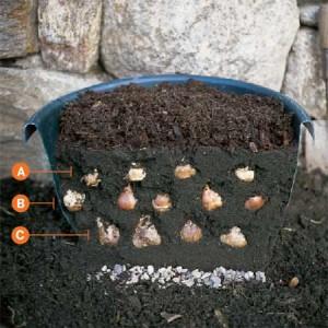 Bulb Garden (6)
