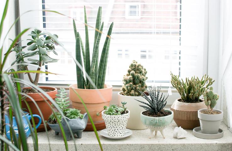 indoor-plants-winter-care